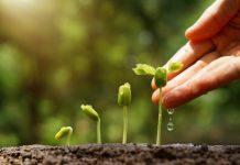 rahsia tumbuhan dengan manusia