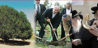 Yahudi tanam pokok Gharqad