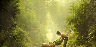 kisah si pengmbala kambing