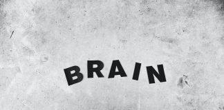 otak organ seks